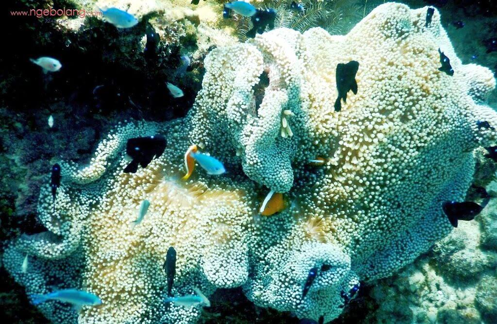 Derawan-Island-coral 1000