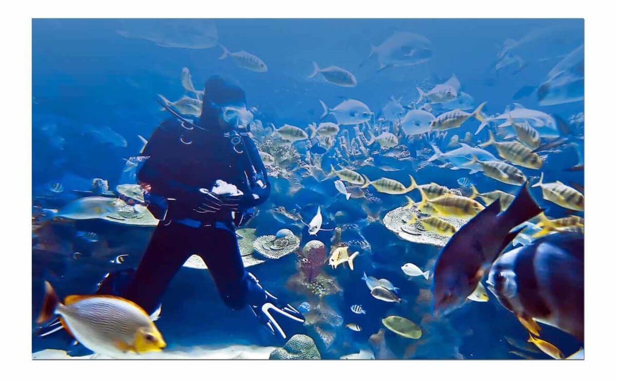 derawan diving 1300